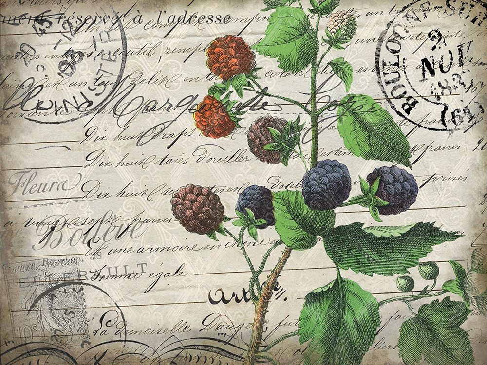 Wall art: Vintage Blackberries, by Kimberly, Allen