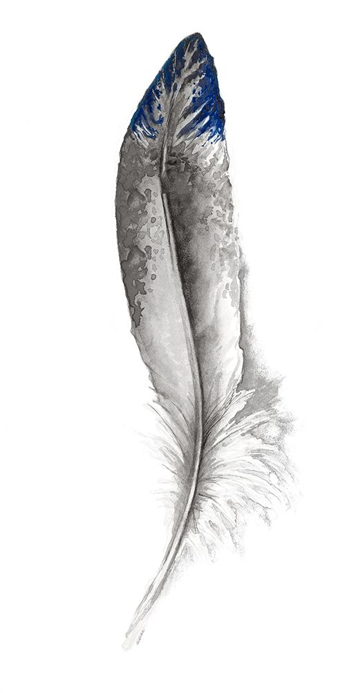Wall art: Royal Blue Tip Feather I, by Diannart
