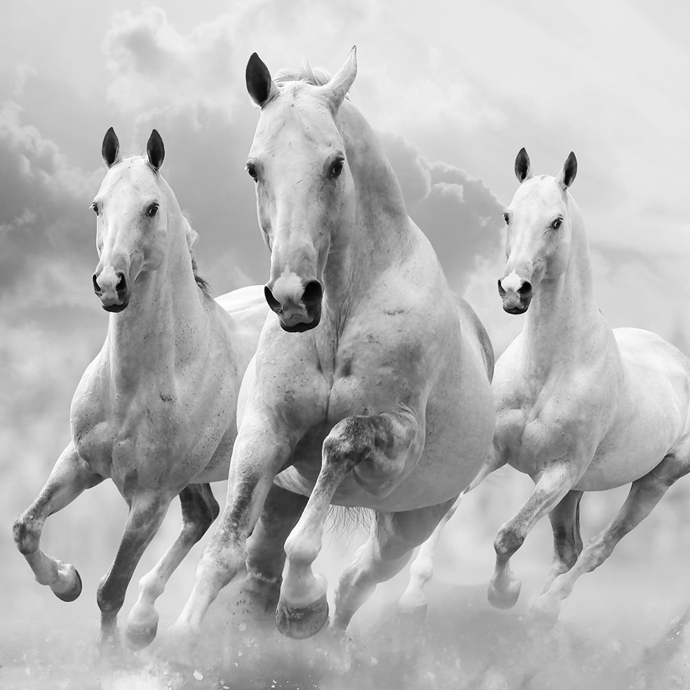 Wall art: Three White Stallions, by Itina, Maria